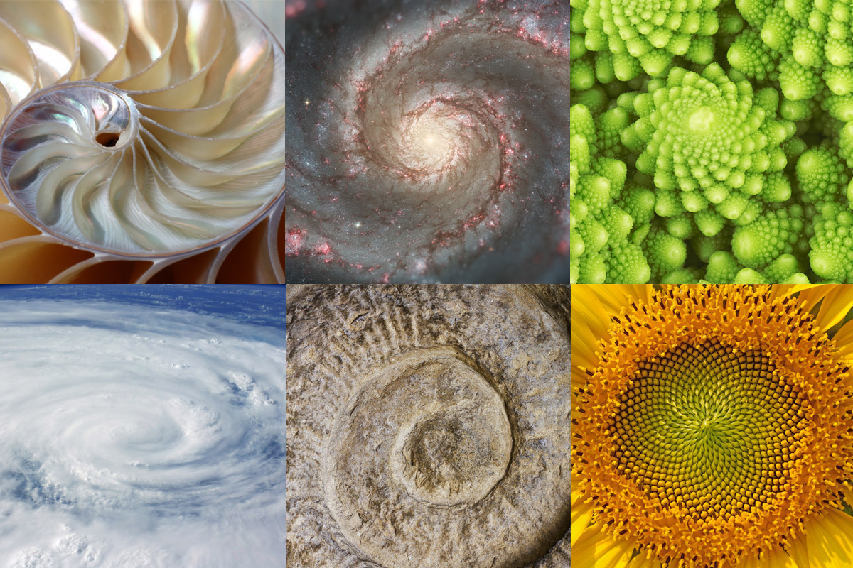 golden ratio nature